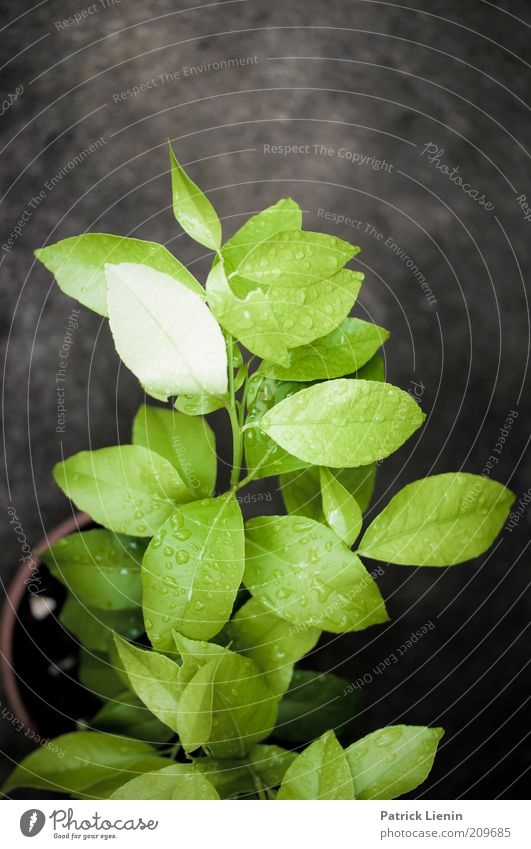 Nature Green Plant Summer Calm Leaf Dark Garden Environment Rain Glittering Wet Drops of water Ground Soft Elements