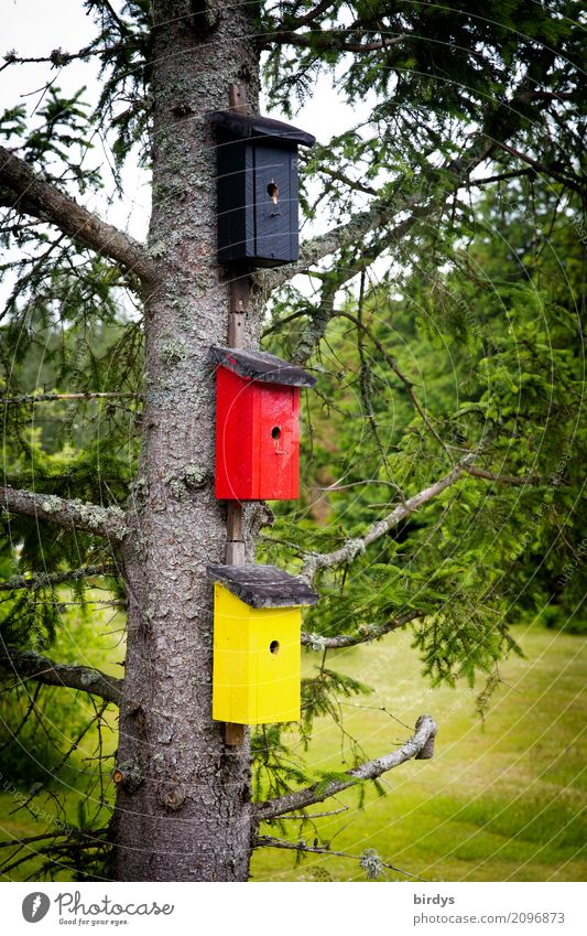 patriotic birds Flat (apartment) Tree Meadow Germany Nesting box Sign Exceptional Funny Positive Yellow Red Black Colour Society Identity Creativity Nature