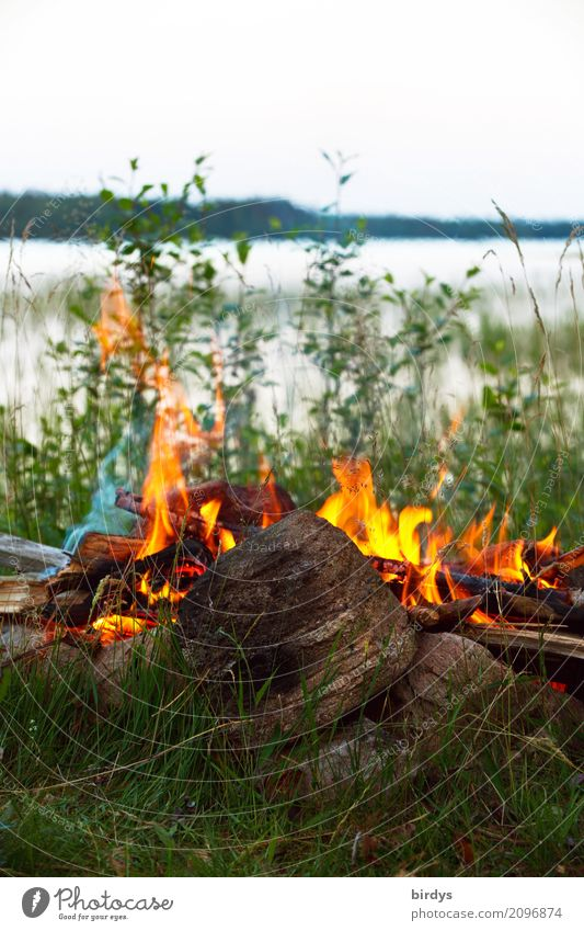 quality of life Calm Adventure Freedom Camping Summer vacation Nature Plant Fire Lakeside Esthetic Positive Warmth Wild Joie de vivre (Vitality)