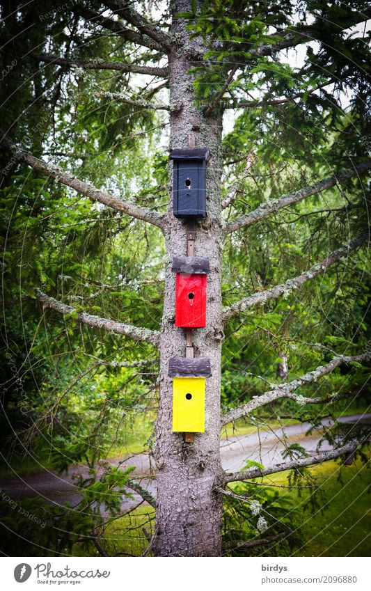for want of substance Art Spring Summer Tree Spruce Germany House (Residential Structure) Nesting box Birdhouse Wood Sign Living or residing Exceptional Funny