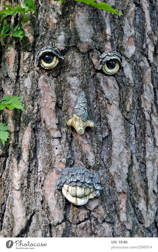 Tree face. Summer Forest Face Work of art Nature Plant Beautiful weather Deserted Moustache Wood Observe Authentic Brash Cute Dry Brown Green Cool (slang)