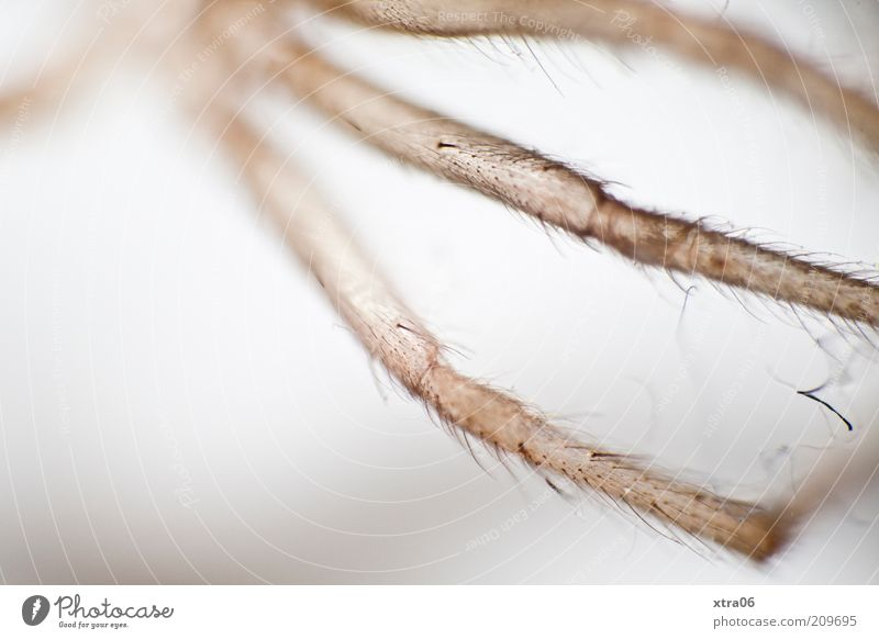 Animal Elegant Thin Delicate Spider Graceful Copy Space left Spider legs
