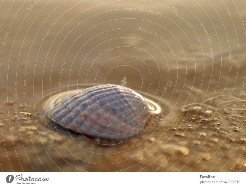 Nature Water Ocean Summer Sand Bright Wet Earth Natural Damp Elements Baltic Sea Mussel Mollusk
