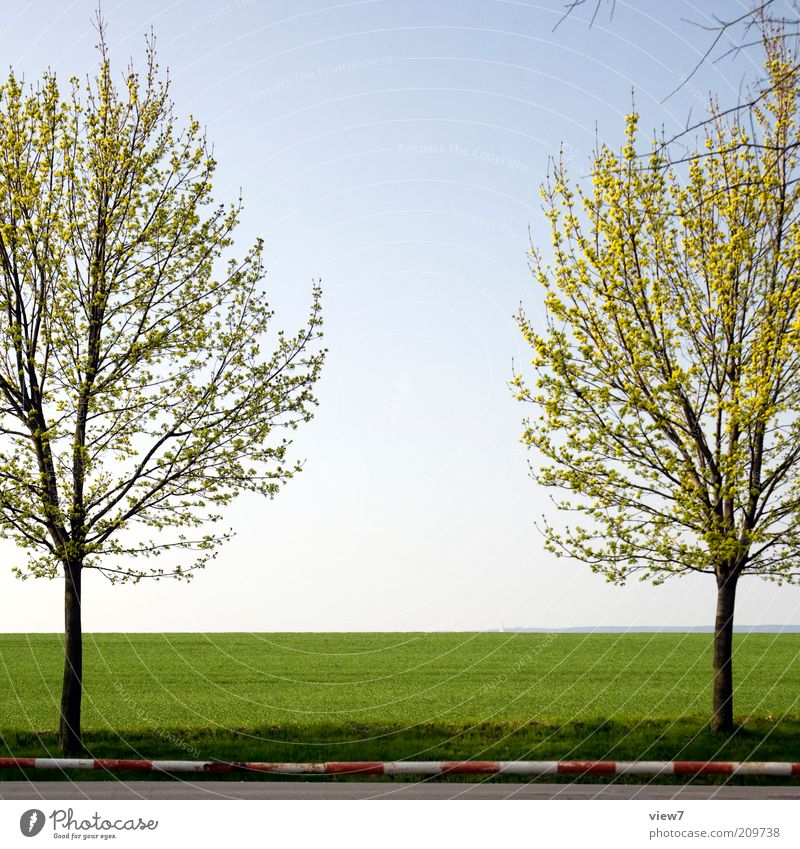 symmetry Environment Nature Landscape Plant Summer Beautiful weather Tree Esthetic Thin Simple Uniqueness Arrangement Pure Moody Symmetry Control barrier Field
