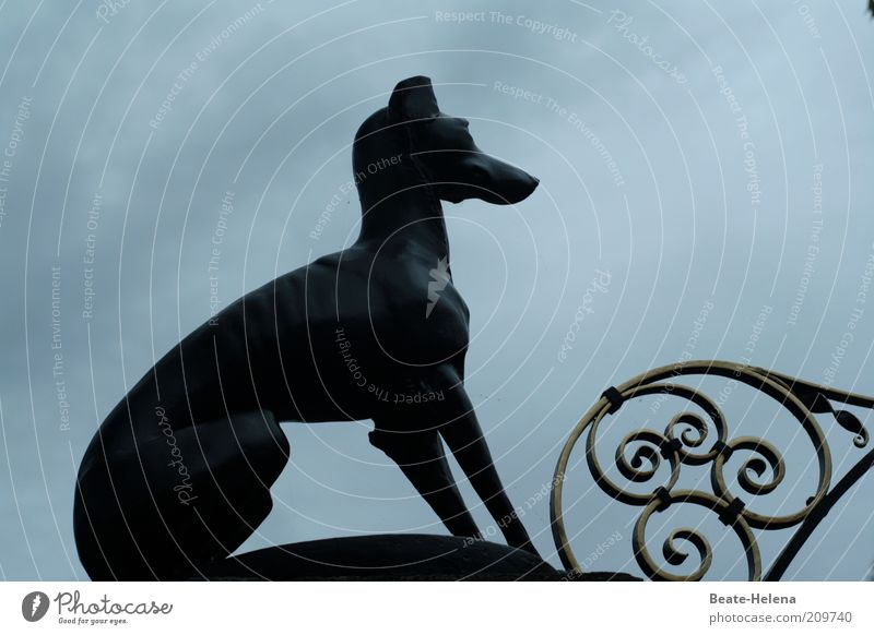 Dog Clouds Dark Metal Power Sit Elegant Signs and labeling Decoration Safety Observe Protection Long Strong Brave