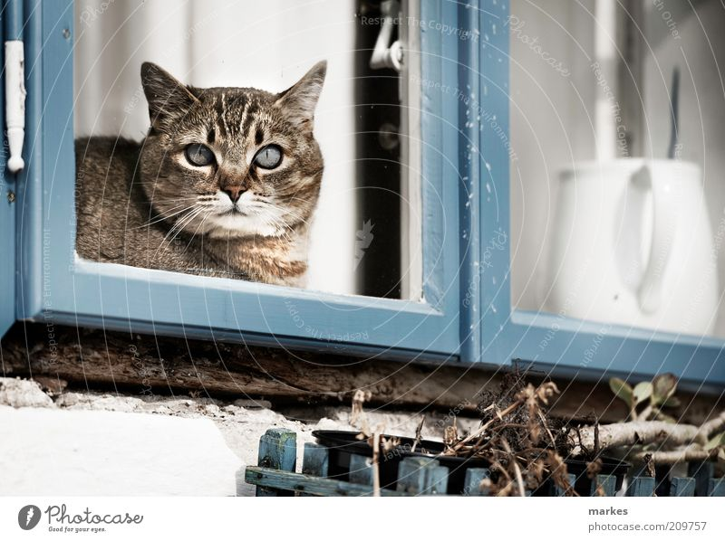 katzeee! Pet Cat 1 Animal Muscular Blue Window White Colour photo Subdued colour Exterior shot Deserted Day Sunlight Shallow depth of field Central perspective
