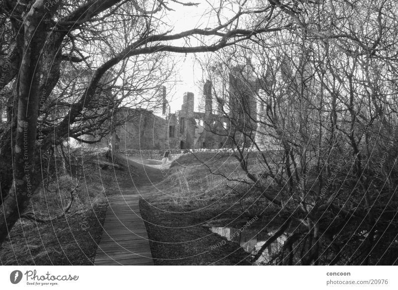 Agatha Christie's Moorlands. Bog Ruin Dark Harrowing Eerie Scotland rotten trees Castle