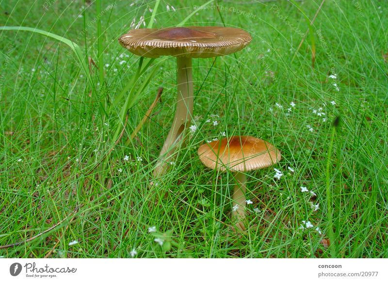 Green Meadow Grass Collection Mushroom