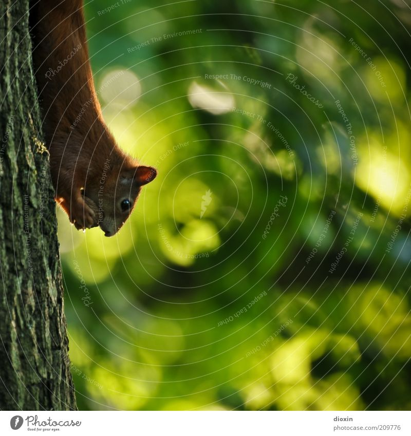 Nature Tree Green Plant Summer Animal Forest Park Brown Small Environment Animal face Pelt To hold on Wild animal Cute