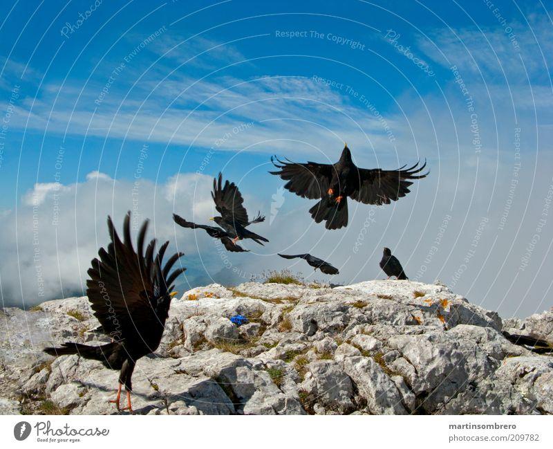 Blue Green Animal Black Gray Stone Rock Bird Wild Wild animal Group of animals Wing Peak Departure Mountain Landing