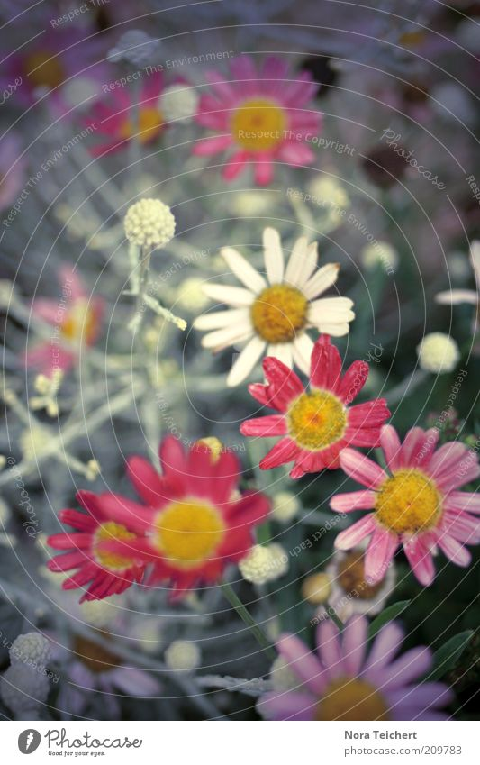 Beautiful Flower Plant Red Summer Emotions Blossom Grass Happy Dream Moody Fresh Esthetic Growth Violet Desire