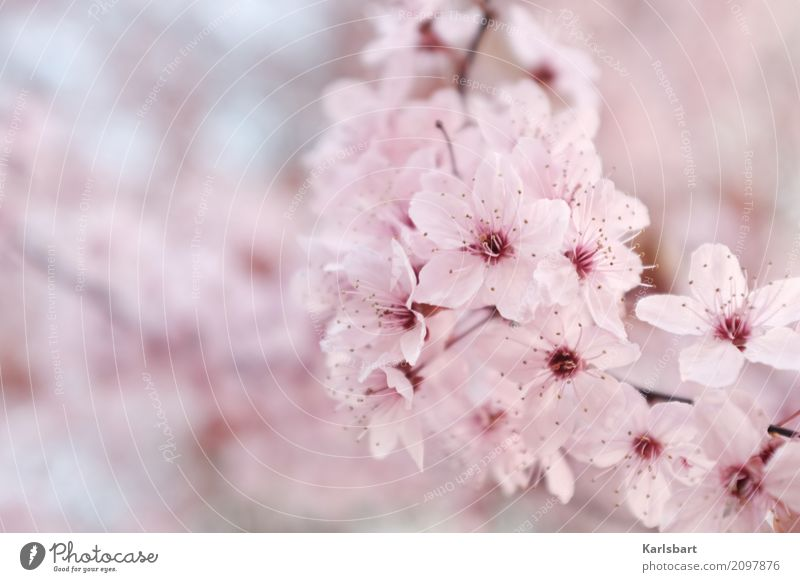 Nature Plant Tree Blossom Spring Healthy Natural Garden Pink Bright Park Fresh Beginning Beautiful weather Fragrance Spring fever
