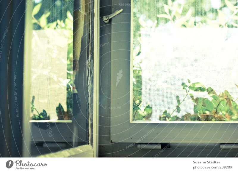 Old White Plant Window Bright Door Living or residing Window pane Copy Space left Hinge Closure View from a window Fly screen Wooden window