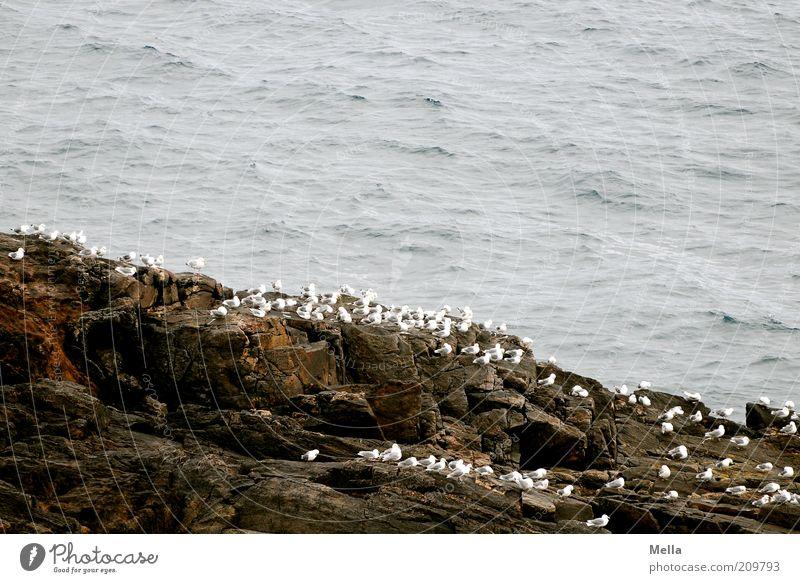 Nature White Ocean Animal Freedom Stone Friendship Moody Together Bird Coast Wait Environment Free Rock Sit