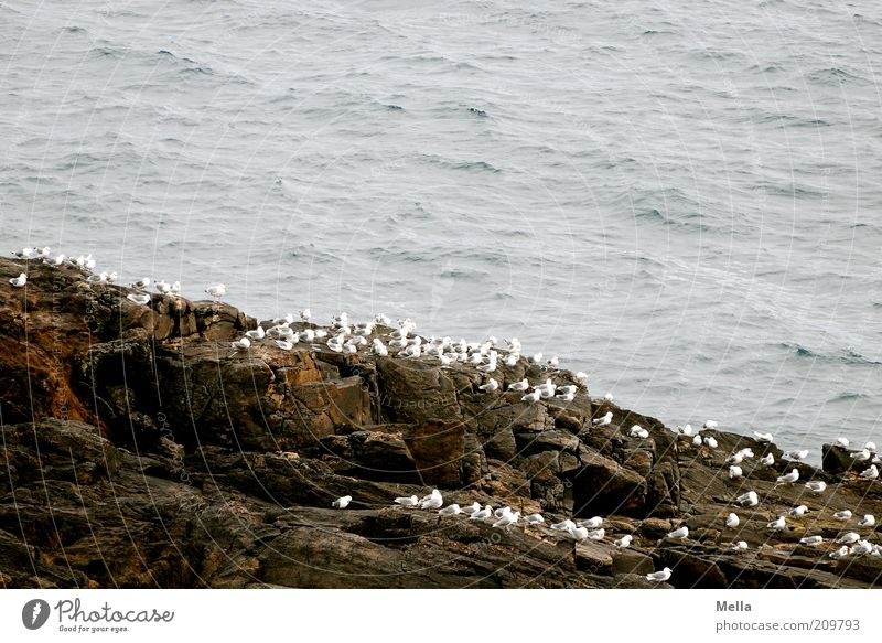 One, two, three, lots and lots. Environment Nature Animal Coast Ocean Island Cliff Rock Bird Seagull Group of animals Flock Stone Crouch Sit Wait Free Together
