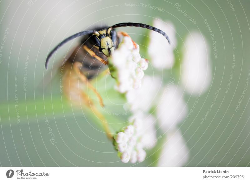 Nature White Flower Plant Summer Eyes Animal Blossom Environment Sit Animal face Insect Wild animal Feeler Wasps Macro (Extreme close-up)