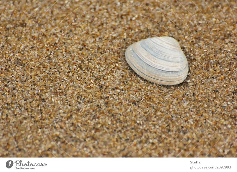 Nature Vacation & Travel Summer Relaxation Calm Beach Natural Brown Sand Weather Beautiful weather Summer vacation Sandy beach Mussel Attentive Vacation mood