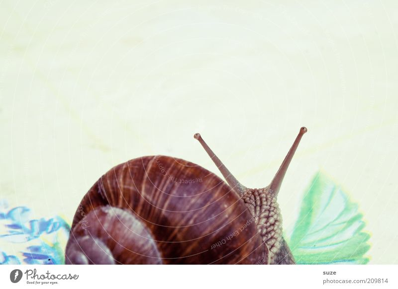 2 rooms, kitchen, bathroom Animal Snail Movement Crawl Slimy Time Mucus Feeler Slowly Eyes Vineyard snail Colour photo Multicoloured Exterior shot Deserted