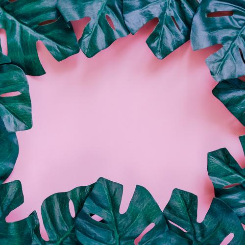 Green palm leaves frame on pink Nature Plant Summer Colour Leaf Spring Style Art Garden Fashion Pink Design Copy Space Bright Decoration