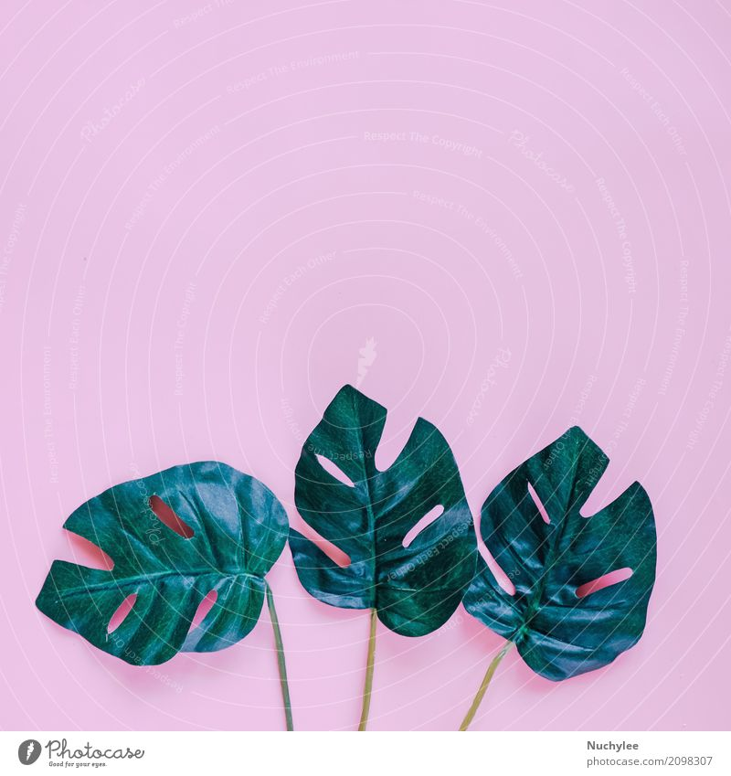 Green palm leaves on pink background Style Design Summer Garden Decoration Wallpaper Art Nature Plant Spring Leaf Fashion Growth Fresh Bright Modern Pink Colour