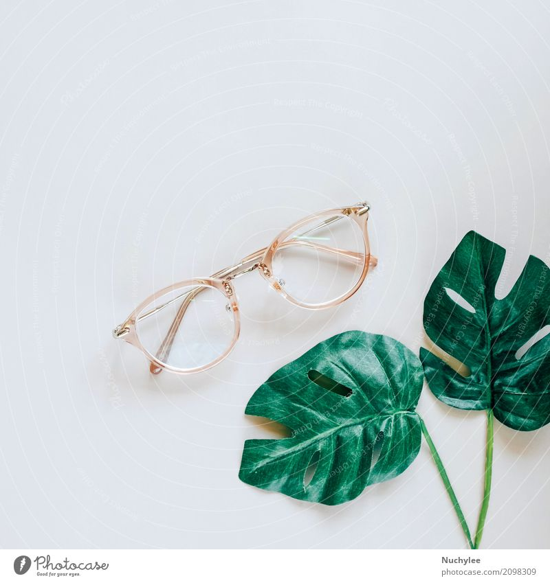 Eyeglasses and green palm leaves Nature Plant Summer Colour Green Leaf Lifestyle Spring Style Art Business Fashion Gray Above Design Copy Space