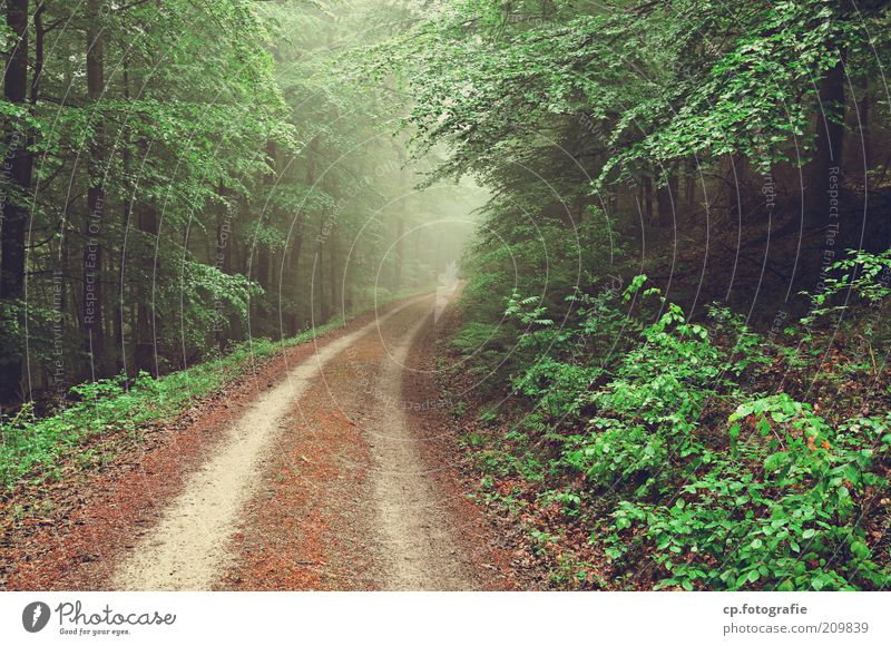 forest path Nature Landscape Plant Fog Tree Bushes Foliage plant Agricultural crop Forest Cold Day Footpath Central perspective Deserted Skid marks