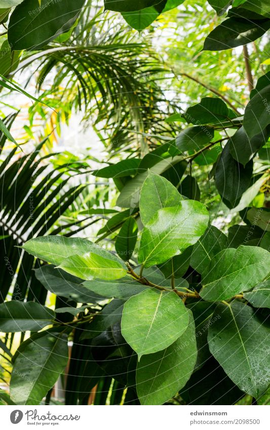 In the jungle Vacation & Travel Summer Nature Plant Virgin forest Wood Breathe Blossoming Discover Hang Stand Growth Large Bright Wet Natural Wild Green Calm