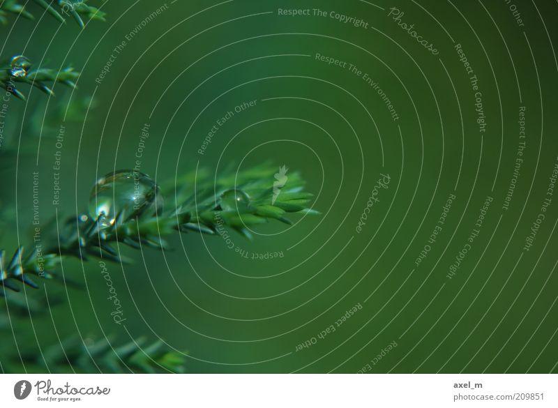 Water Green Plant Summer Calm Rain Environment Wet Drops of water Fresh Growth Near Pure Natural Damp Dew