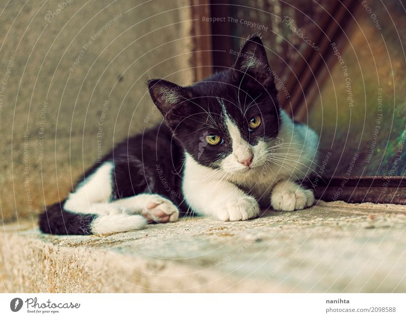 Beautiful alley kitty Cat Town White Animal Black Baby animal Eyes Yellow Natural Free Cute Friendliness Soft Protection Trust
