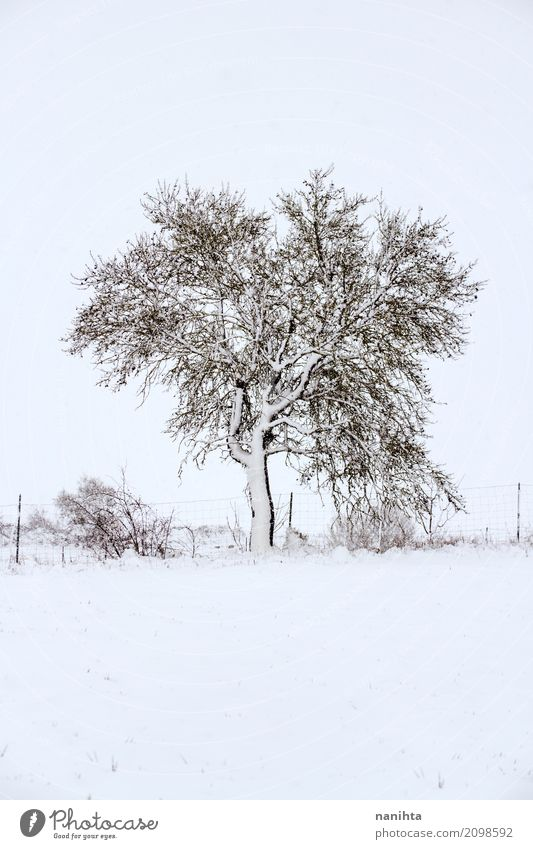 Snowy tree Environment Nature Landscape Plant Winter Climate Weather Bad weather Ice Frost Snowfall Tree Bushes Meadow Authentic Simple Cold Natural Strong Wild