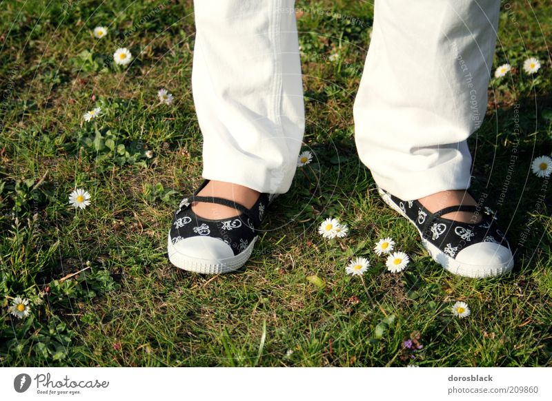 Woman Human being Nature Green White Beautiful Summer Adults Feminine Spring Fashion Footwear Stand Lawn Simple Daisy