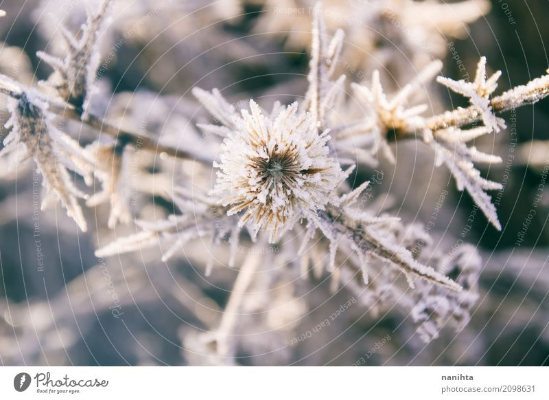 Beautiful icy plants Environment Nature Plant Sun Winter Climate Weather Bad weather Ice Frost Snow Foliage plant Wild plant Cold Natural Gray White Life Pure