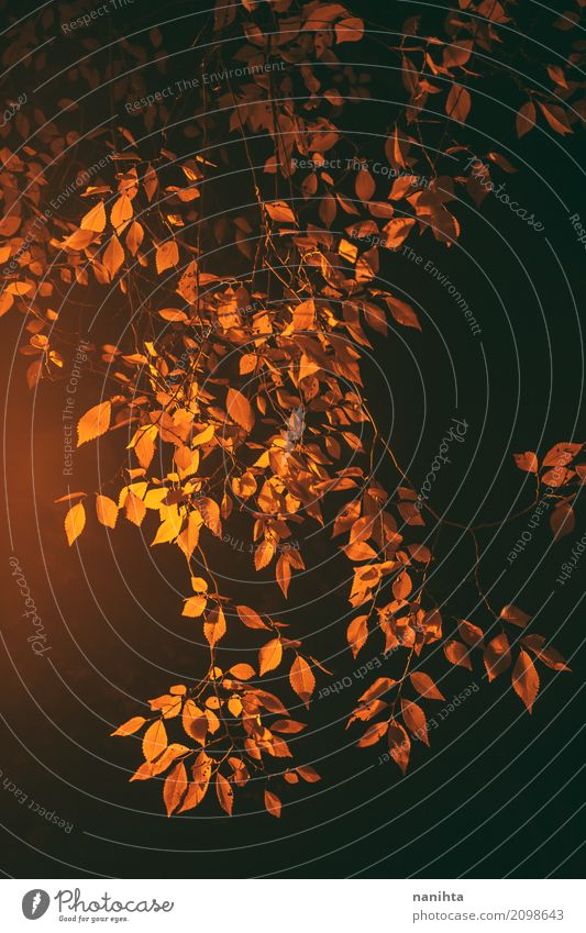 Golden leaves in the night Nature Night sky Autumn Plant Leaf Authentic Elegant Natural Yellow Orange Black Branch Simple Tone-on-tone Warmth Street lighting