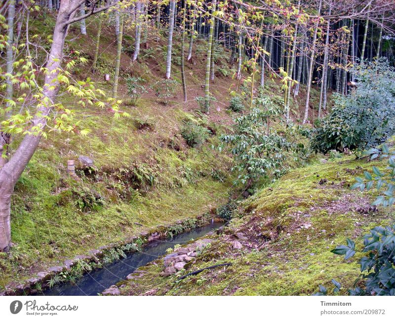 Nature Water Plant Tree Landscape Forest Emotions Grass Moody Park Large Bushes Brook Japan Bamboo Twigs and branches