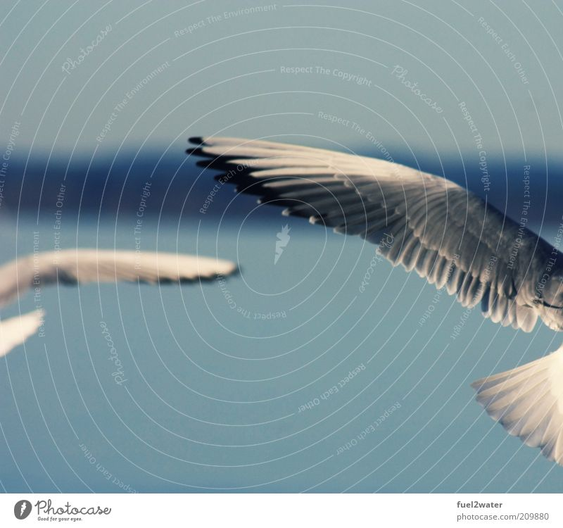 White Blue Black Animal Movement Gray Air Contentment Bird Elegant Esthetic Wing Fantastic Seagull Hover Ease
