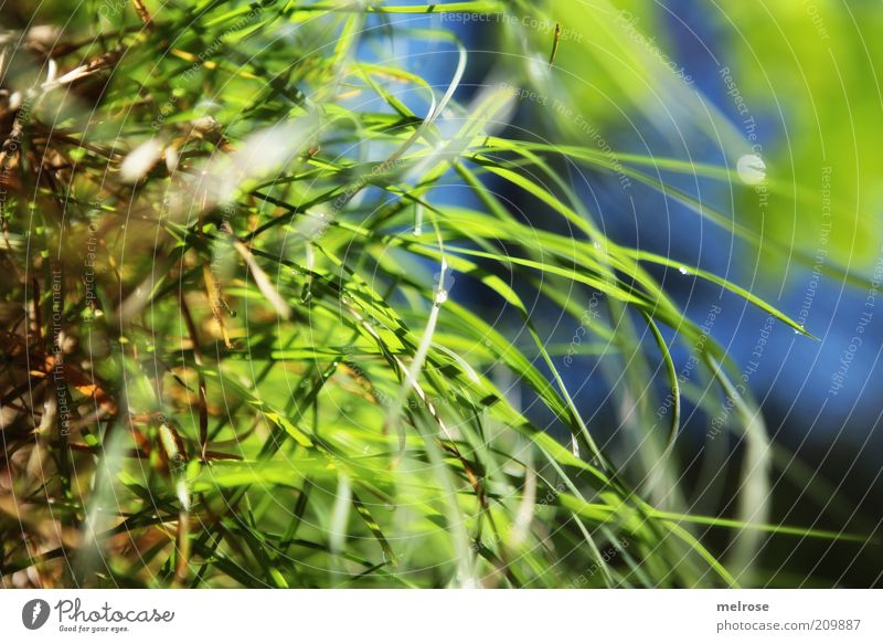 Nature Green Blue Summer Calm Grass Drops of water Fresh Damp Dew