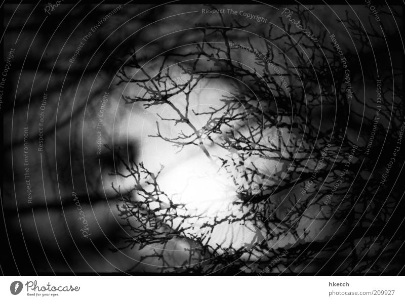 Who's that? Wolf? Moon Full  moon Night sky Tree Twig Shadow play Moonstruck Dark Creepy Dangerous Fear Frightening Black & white photo Exterior shot Deserted