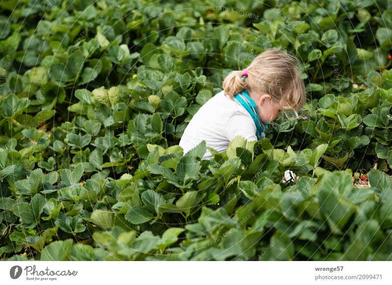in strawberry field ii Human being Child Toddler Girl 1 3 - 8 years Infancy Plant Leaf Agricultural crop Strawberry Field Green Turquoise White Pick Harvest