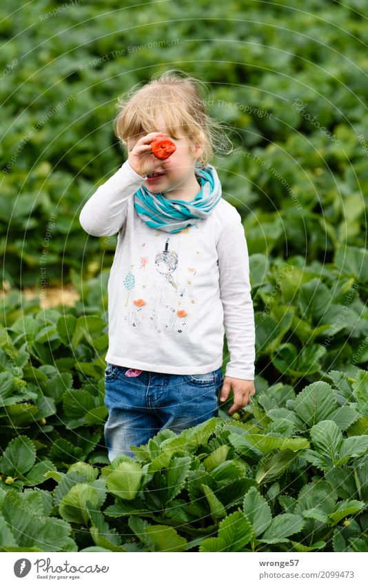 in strawberry field iii Human being Child Toddler Girl 1 3 - 8 years Infancy Plant Agricultural crop Strawberry Field Crops Large Sweet Blue Multicoloured Green