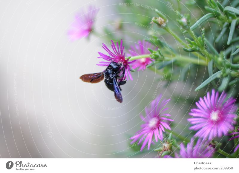 insect Nature Plant Animal Summer Flower Blossom Fly 1 Blossoming Fragrance Crawl Exotic Sweet Violet Spring fever Beautiful Movement Idyll Insect Colour photo