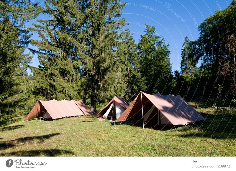 better than 5* Lifestyle Leisure and hobbies Vacation & Travel Trip Freedom Camping Summer vacation experiential education Nature Grass Fir tree Meadow Forest