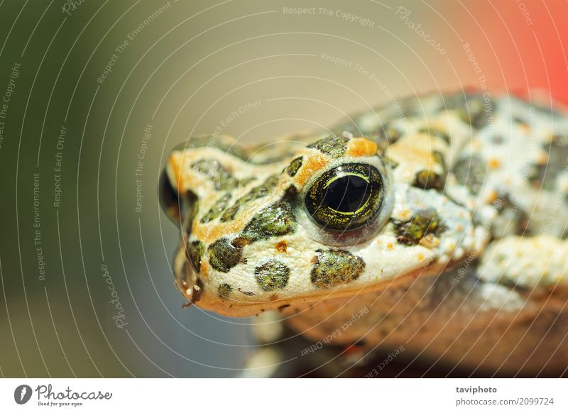 portrait of cute european green toad Nature Beautiful Green Animal Natural Small Garden Brown Wild Wet Cute Living thing European Single Slimy Sticky