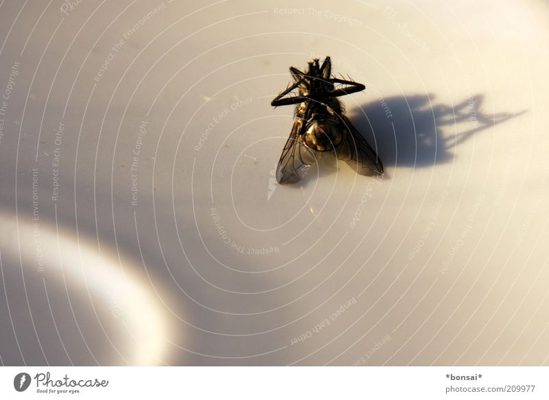 shadow of death Dead animal Fly Wing 1 Animal Desert bowl Lie Old Broken Small Near Black White Death End Nature Calm Stagnating Transience Silhouette