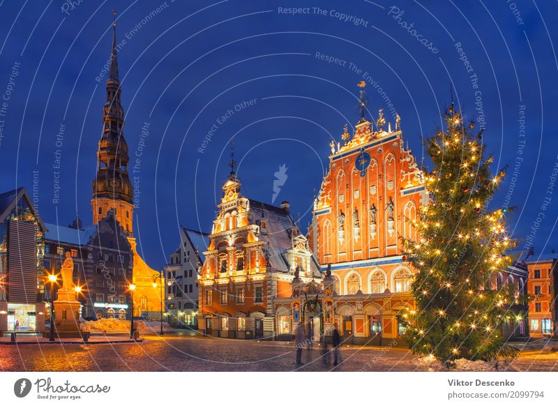 Christmas tree on town hall square in Riga Vacation & Travel Old Christmas & Advent Town Tree House (Residential Structure) Winter Architecture Street Building