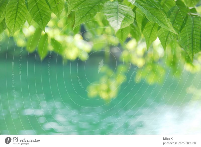 Nature Tree Green Summer Leaf Spring Lake Park Coast River Pure Delicate Idyll Beautiful weather Brook Leaf canopy