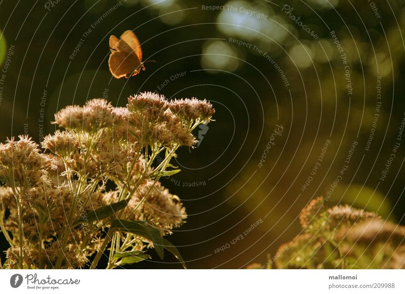 story time Harmonious Calm Environment Nature Plant Animal Sunlight Summer Bushes Blossom Wing Butterfly Relaxation Flying Dream Fragrance Warmth