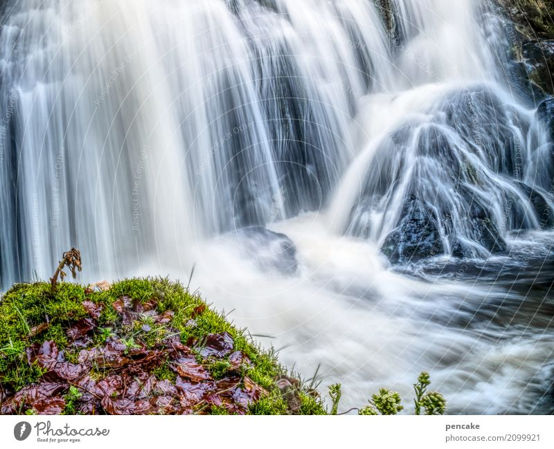 Let it flow! Nature Landscape Elements Water Spring Plant Leaf Waterfall Triberg Relaxation Experience Eternity Serene Idyll Life Long exposure Wet Flow Rock