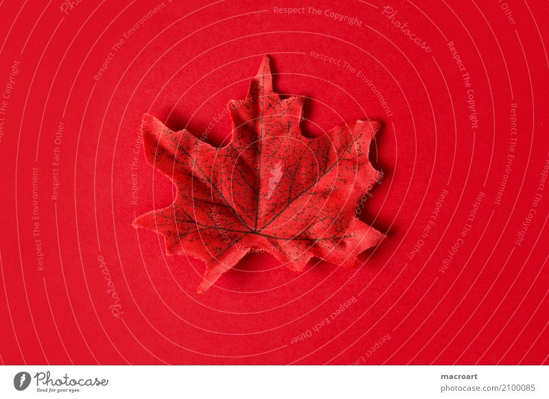 Red leaf on red background Multicoloured Leaf Individual Autumn Autumnal Decoration Loneliness Lie Single