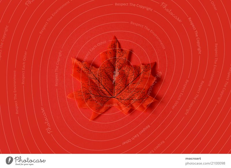 leaf Multicoloured Leaf Individual Autumn Autumnal Decoration Loneliness Lie Single Red