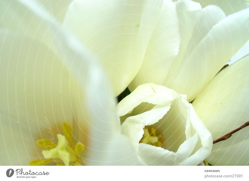 Clear, pure & fresh White Flower Macro (Extreme close-up) Blossom Blossom leave Leaf Fresh Pure Clarity New